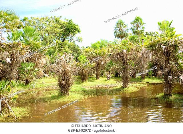 Saline pond, Corumbá, Mato Grosso do Sul, Brazil