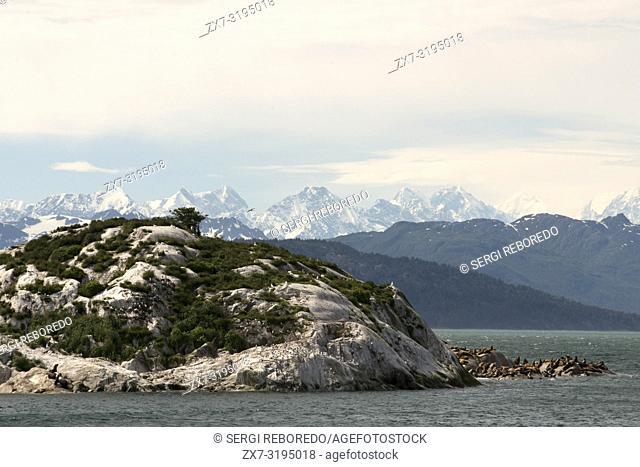 A colony of Steller Sea Lions (Eumetopias jubatus) on South Marble Island in Glacier Bay National Park, Alaska. USA. Northern (Steller) sea lions (Eumetopias...