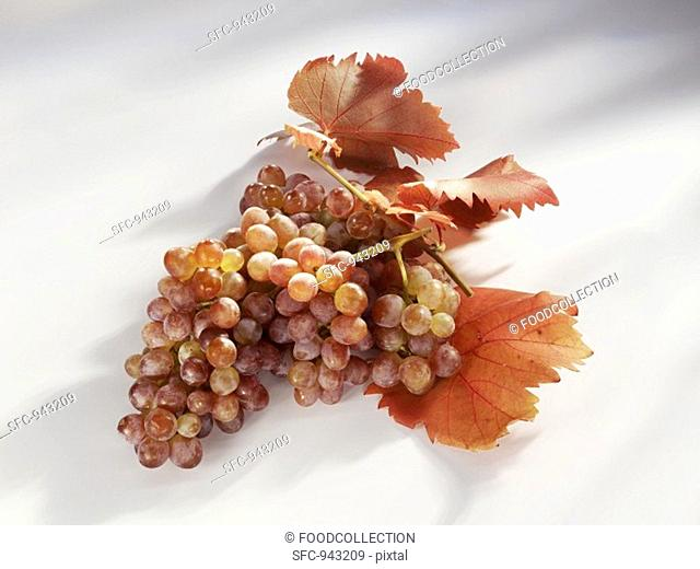 Pink grapes with vine leaves