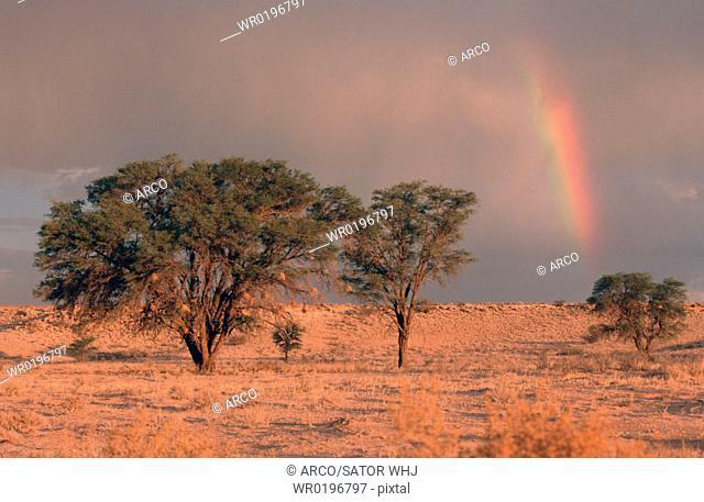 Rainbow, over, the, steppe, Kalahari, Gemsbok, Park, South, Africa