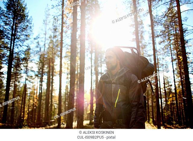 Hiker among trees on sunny day, Keimiotunturi, Lapland, Finland