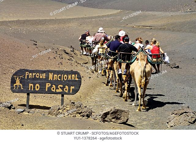 Camel Herder and Camels take tourist's through Timanfaya National Park, Lanzarote, Canary Isles