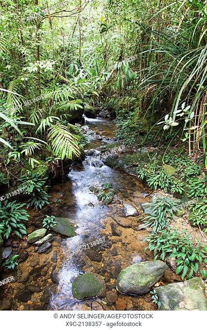 Rainforest in Mount Kinabalu Park, Borneo, Malaysia