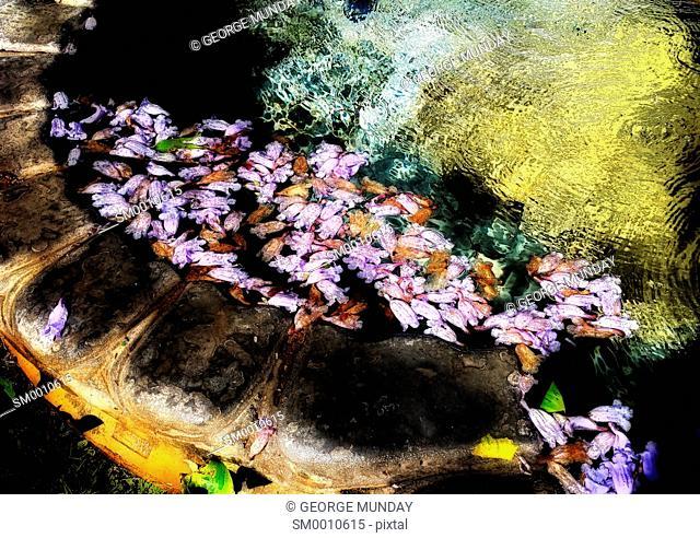 Blossom petals in a Fountain in Torrox Pueblo,