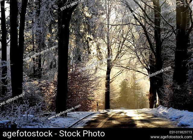 Straße mit Bäumen Raureif Winter