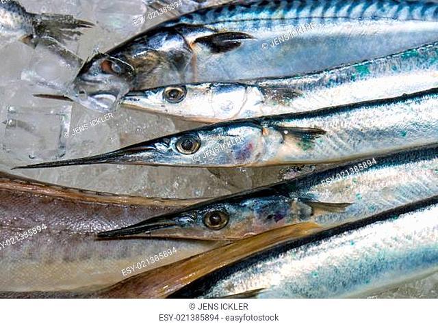Frischer Hornhecht auf dem Fischmarkt