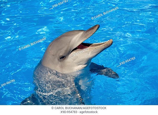 a bottlenose dolphin in an oceanarium