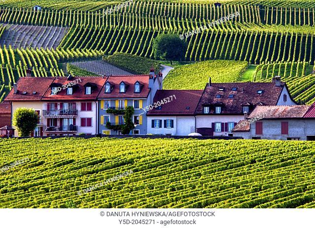 Europe, Switzerland, Canton Vaud, La Côte, Morges district, Féchy near Aubonne, living in the heart of vineyards, autumn time