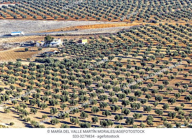 Farm and olive trees in Mora. Toledo. Spain. Europe