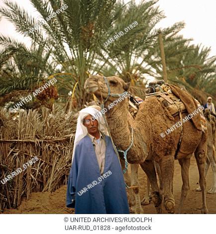 Ein Kamelritt durch die Oase Nefta, Tunesien 1970er Jahre. A camel ride through the oasis of Nefta, Tunisia 1970s