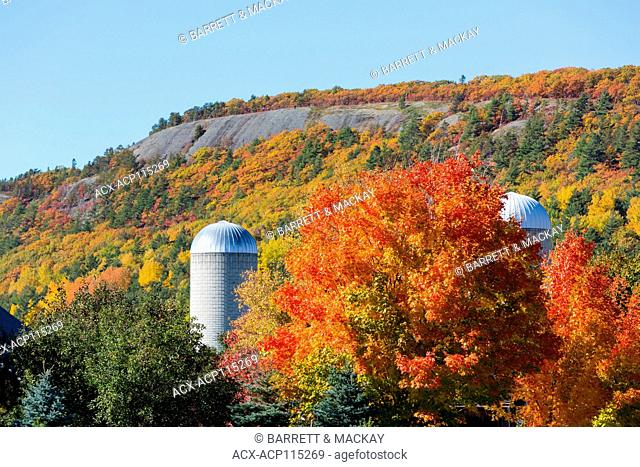 Maple trees and farm, Dutch Valley, New Brunswick, Canada