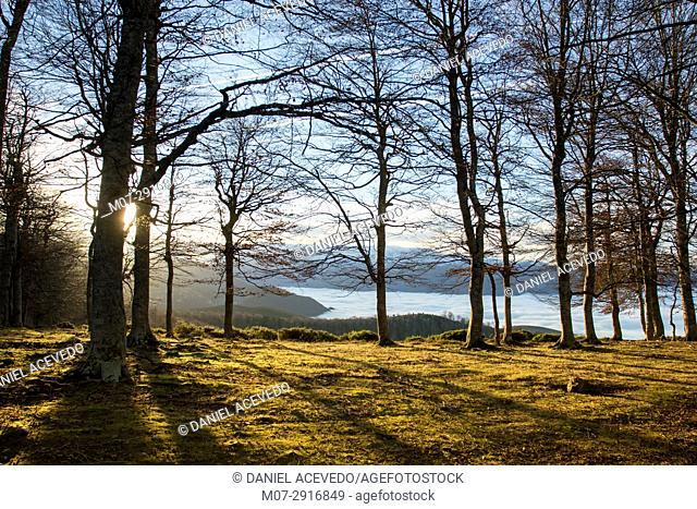 Beech tree forest at Anguiano mountains, La Rioja region, Spain, Europe
