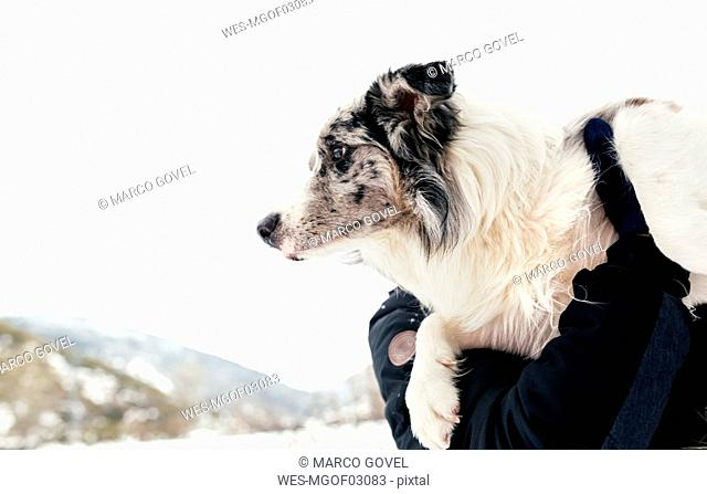 Dog in the arms of its owner