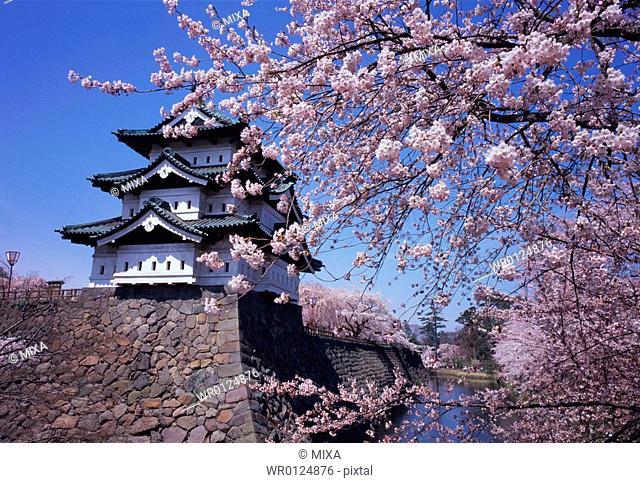 Hirosaki Castle in spring
