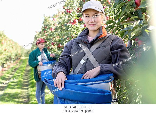 Portrait smiling female farmer harvesting apples in orchard