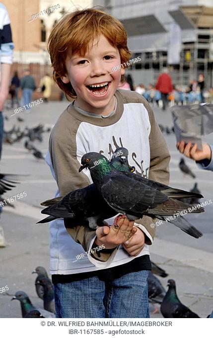 Boy feeding pigeons at the Piazza San Marco, Venice, Venezia, Italy, Europe