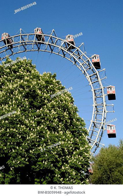 Vienna, Giant Ferry Wheel, chestnut tree in blossom, Austria, Vienna, 2. district, Vienna - Prater