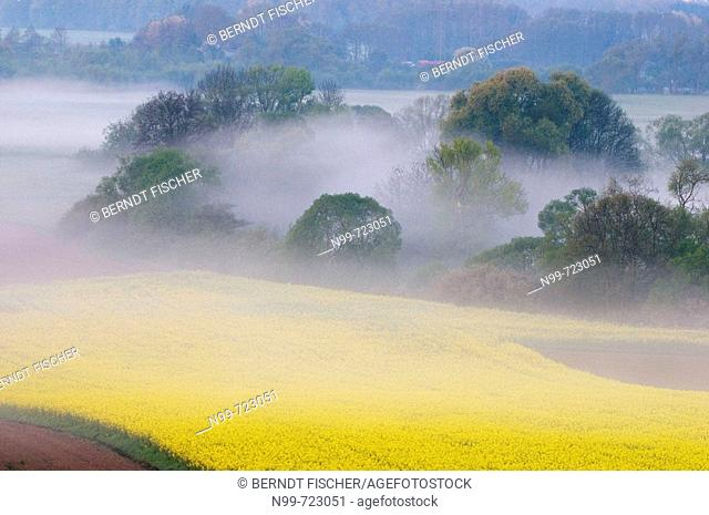Main valley near Kulmbach, morning mist in spring, rape field and riparian meadow land, Franconia, Bavaria