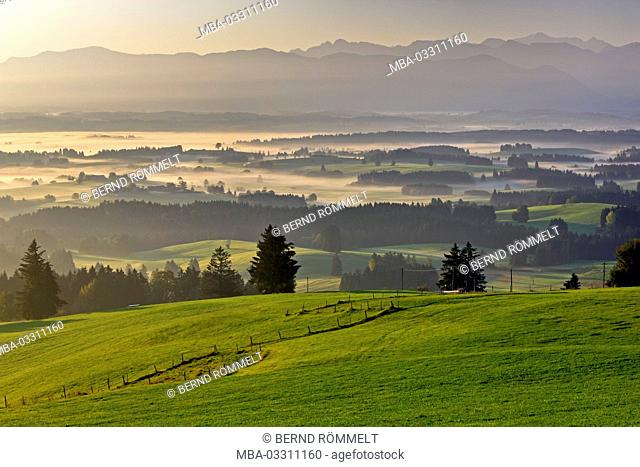 Germany, Bavaria, Allgäu, Ostallgäu district, Königswinkel region, mountain Auer, foothills of the Alps, Ammergauer alps