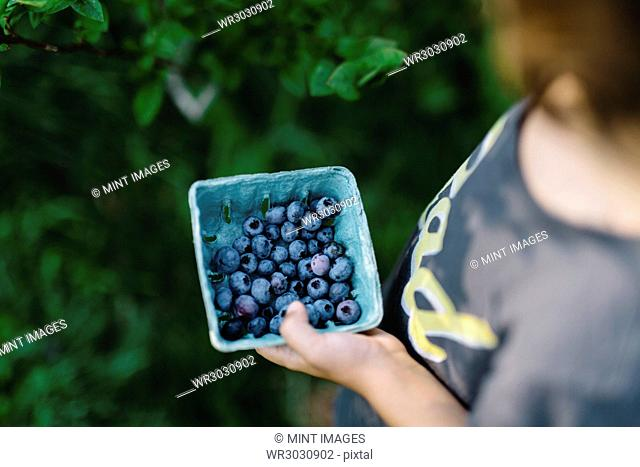 High angle close up of child holding punnet of fresh blueberries