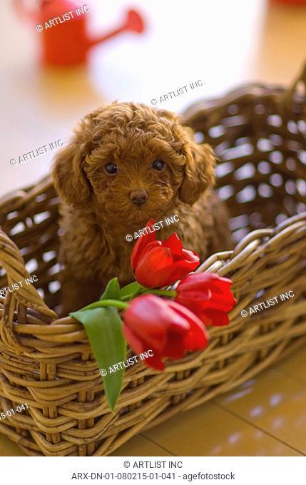 A puppy sitting in a basket