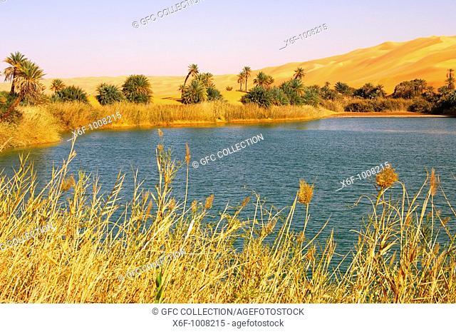 At the desert lake Um el Maa in the Awbari sand sea, Sahara desert, Libya