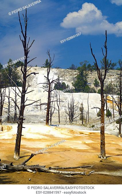mammoth Terraces in Yellowstone National Park, Usa