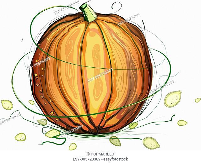 Pumpkin and Seeds Illustration