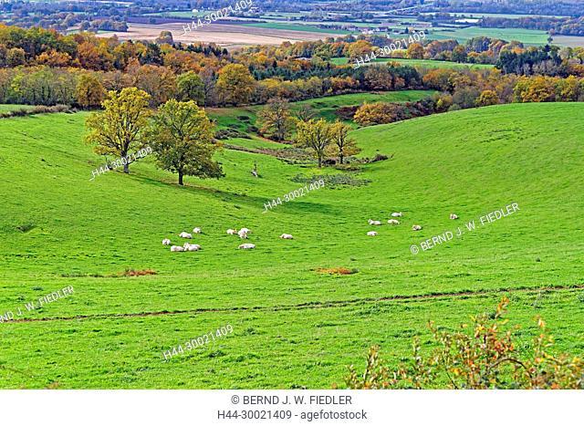 Bassin de Vichy, Landschaft, Wiese, Rinderherde