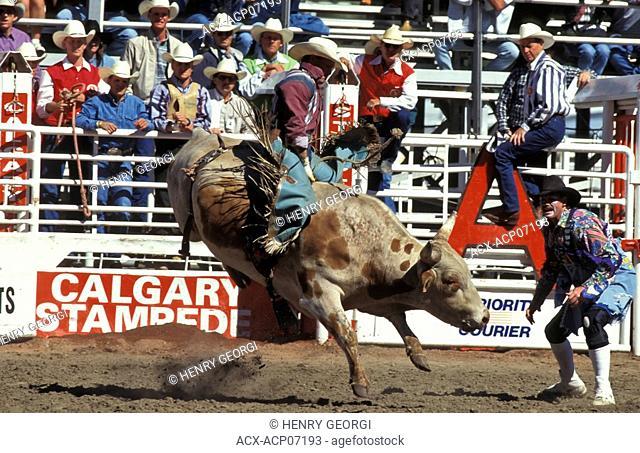 Bull rider at Calgary Stampede, Calgary, Alberta, Canada