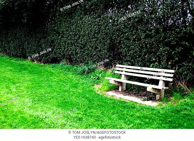 Park bench next to hedgerow, England, UK