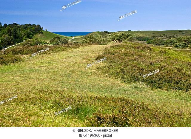 The nature reserve Heatherhill near Raageleje, Denmark, Europe