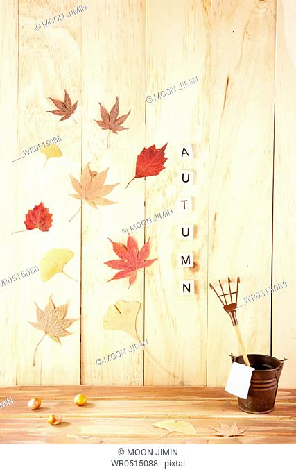 Autumn With Fallen Leaves