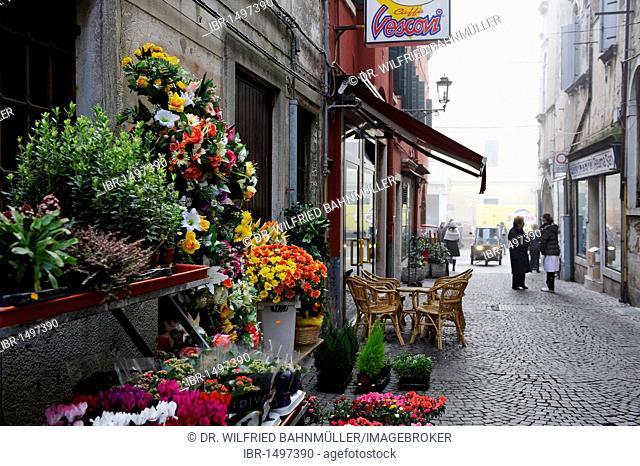 Chioggia, Adriatic Sea, flower shop in an alley, Veneto, Venetia, Italy, Europe