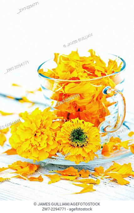 African Marigold Tagetes with glass tea cup filled with petals