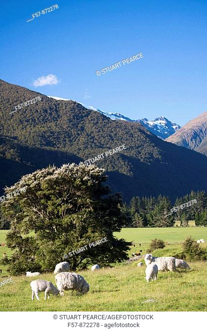 Aspiring National Park, South Island, New Zealand