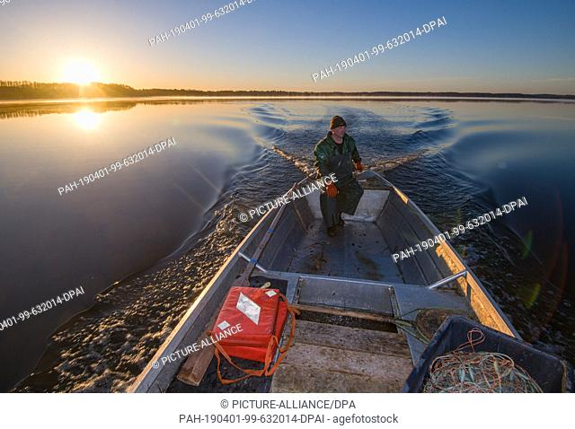01 April 2019, Brandenburg, Groß Schauen: Laszlo Acz, fisherman of the fishery Köllnitz, goes to the sunrise with his barge over the water of the Groß Schauener...