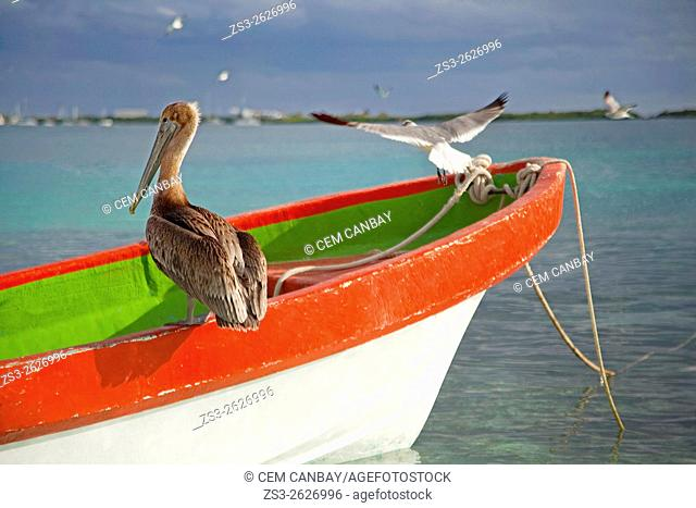 Pelican and birds on the fishing boat near the beach, Isla Mujeres, Cancun, Quintana Roo, Yucatan Province, Mexico, North America