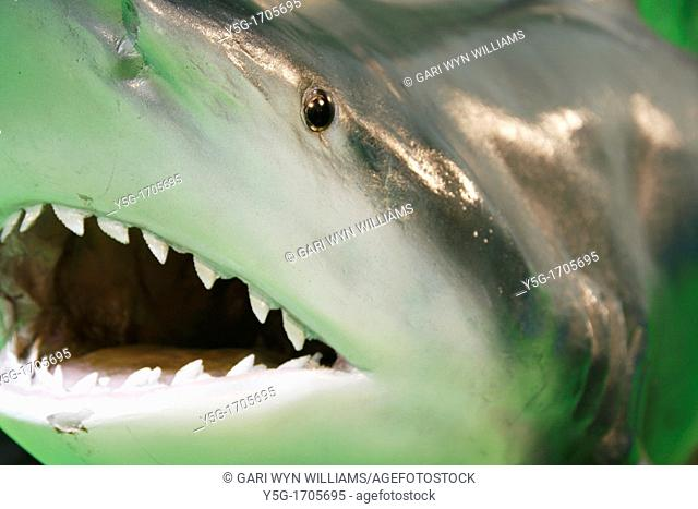 model shark with sharp teeth at exhibition show