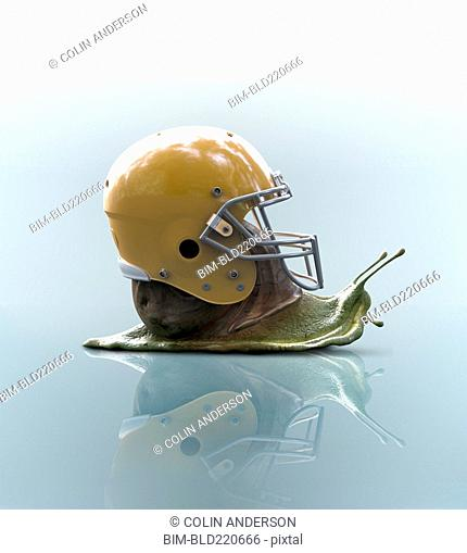 Snail wearing football helmet on shell