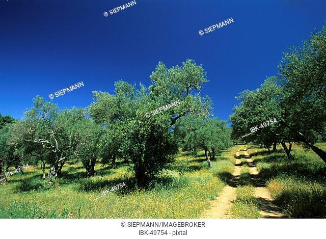 Spain Andalusia Sierra de Aracena Huelva Galaroza