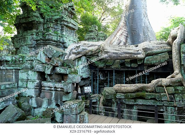 Kapok tree growing in the ruins of Preah Khan Temple, UNESCO World Heritage Site, Angkor, Siem Reap,Cambodia, Indochina, Southeast Asia, Asia