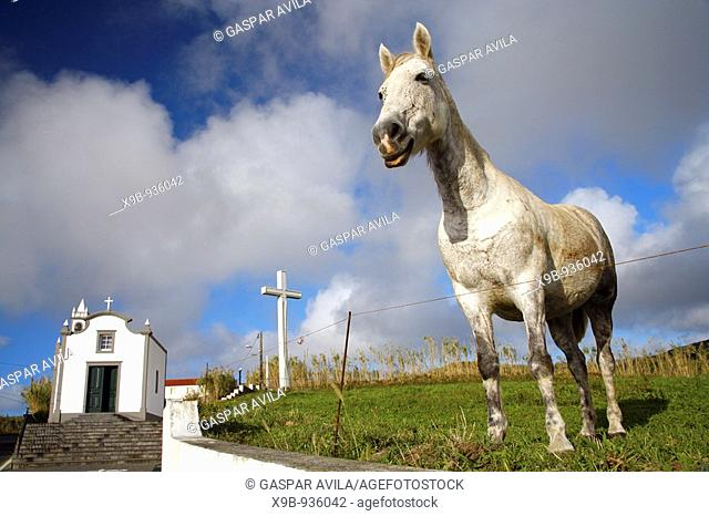 A horse grazing near the chapel of Our Lady of Fatima  Village of Ginetes, Sao Miguel island, Azores