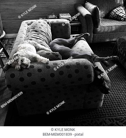 Dogs sleeping on sofa in living room