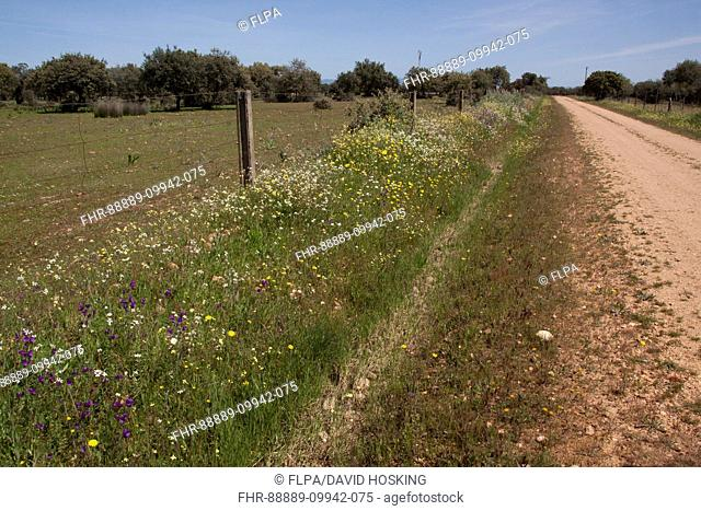 The abundance of wild flowers growing on a road side verge in Extremadura, Spain