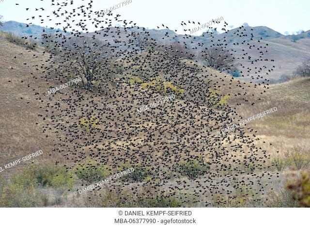 flock of birds in the Vashlovani national park in the outmost southeast of Georgia