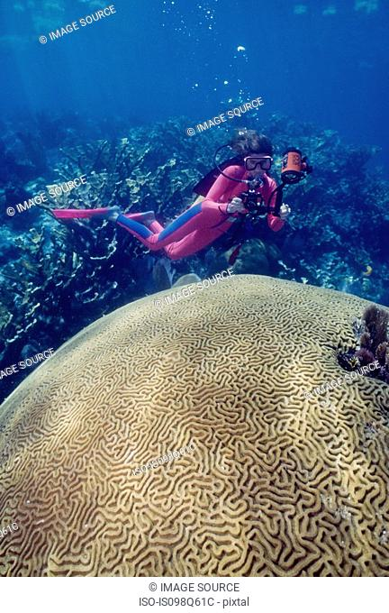 Diver with large brain coral