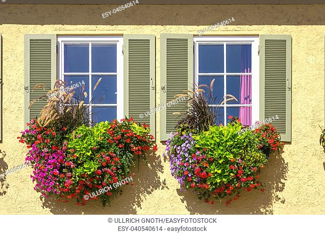 Colourful flowers at the window