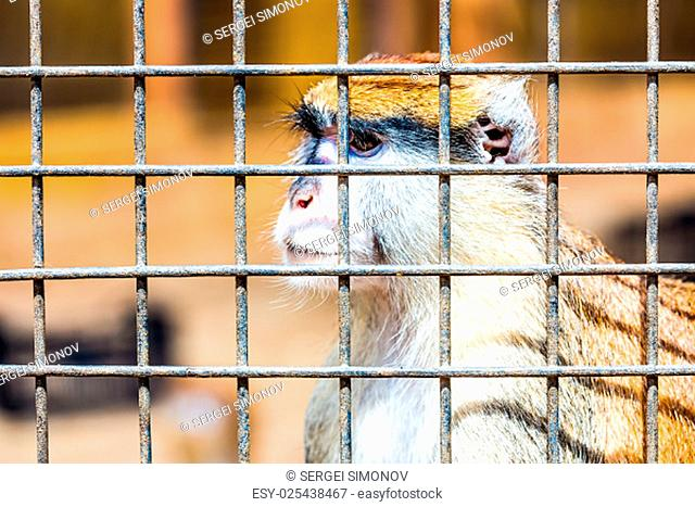 Monkey looking through zoo cell grille