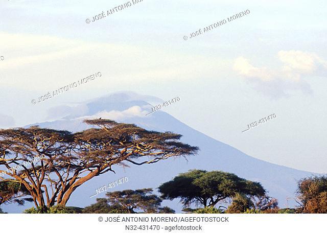 Mount Meru. Landscape, acacia trees. Tanzania. Africa
